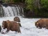 alaska-brooks-falls-camp-1000-37