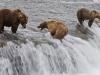 alaska-brooks-falls-camp-1000-9