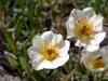 Fauna und Flora im Denali NP