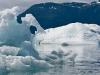 alaska-valdez-columbia-bay-glacier-1000-10