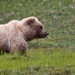 Denali Nationalpark und Preserve (Teil 1)