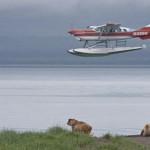 Anreise (Video) zum Brooks Camp im Katmai NP
