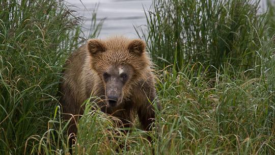 Menschen beobachten Bären - Bären beobachten Menschen