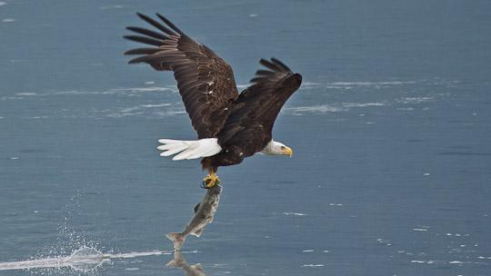 Irgendwie wollen in Valdez alle nur das eine ... den Lachs fischen